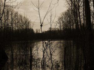 Paysage inondé